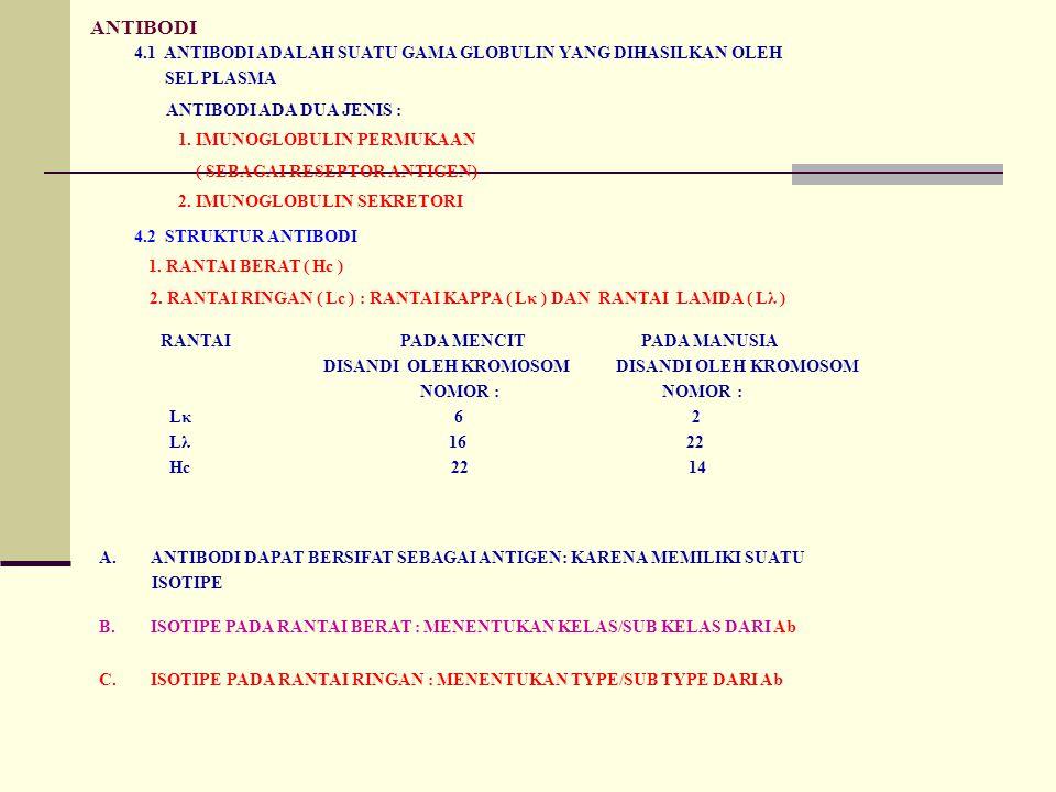 ANTIBODI 4.1 ANTIBODI ADALAH SUATU GAMA GLOBULIN YANG DIHASILKAN OLEH SEL PLASMA ANTIBODI ADA DUA JENIS : 1. IMUNOGLOBULIN PERMUKAAN ( SEBAGAI RESEPTO