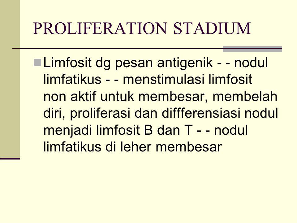 PROLIFERATION STADIUM Limfosit dg pesan antigenik - - nodul limfatikus - - menstimulasi limfosit non aktif untuk membesar, membelah diri, proliferasi