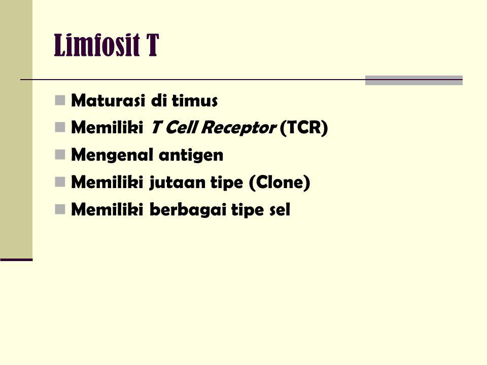 Limfosit T Maturasi di timus Memiliki T Cell Receptor (TCR) Mengenal antigen Memiliki jutaan tipe (Clone) Memiliki berbagai tipe sel