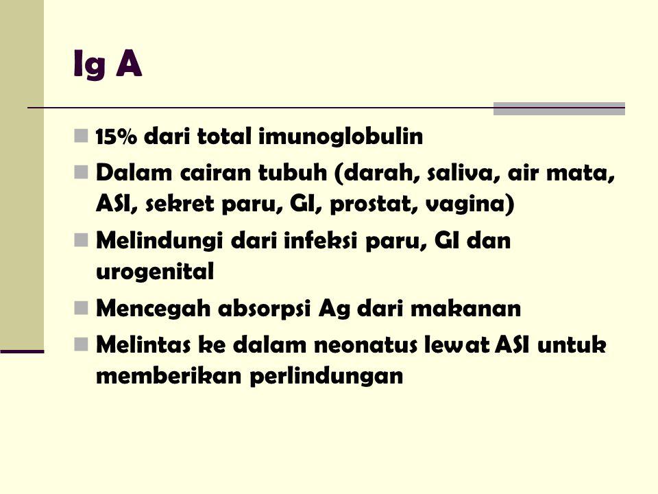Ig A 15% dari total imunoglobulin Dalam cairan tubuh (darah, saliva, air mata, ASI, sekret paru, GI, prostat, vagina) Melindungi dari infeksi paru, GI