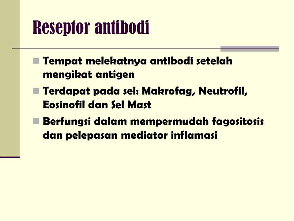 Reseptor antibodi Tempat melekatnya antibodi setelah mengikat antigen Terdapat pada sel: Makrofag, Neutrofil, Eosinofil dan Sel Mast Berfungsi dalam mempermudah fagositosis dan pelepasan mediator inflamasi
