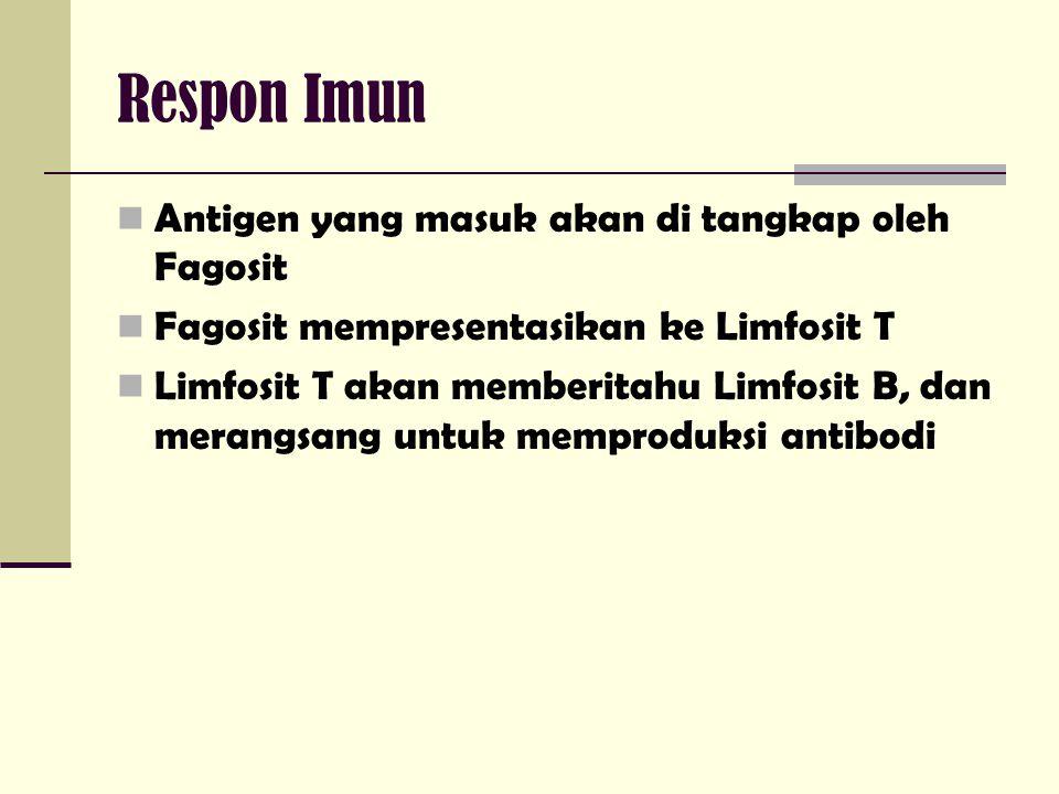 Respon Imun Antigen yang masuk akan di tangkap oleh Fagosit Fagosit mempresentasikan ke Limfosit T Limfosit T akan memberitahu Limfosit B, dan merangs