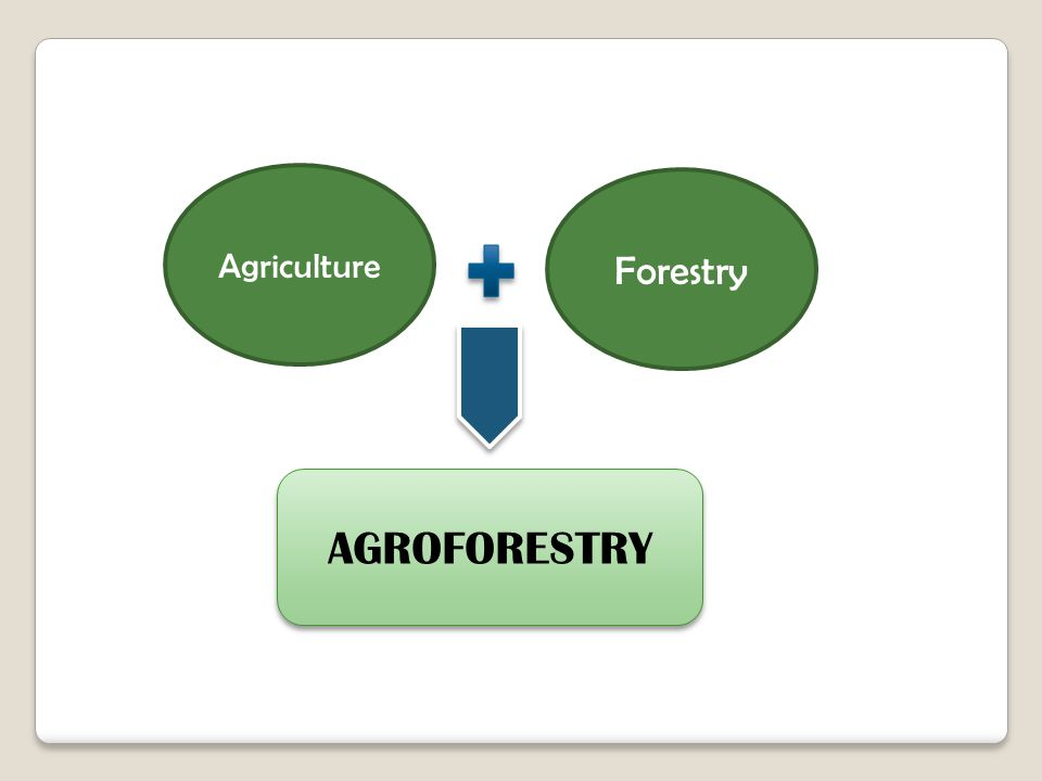Agriculture Forestry AGROFORESTRY