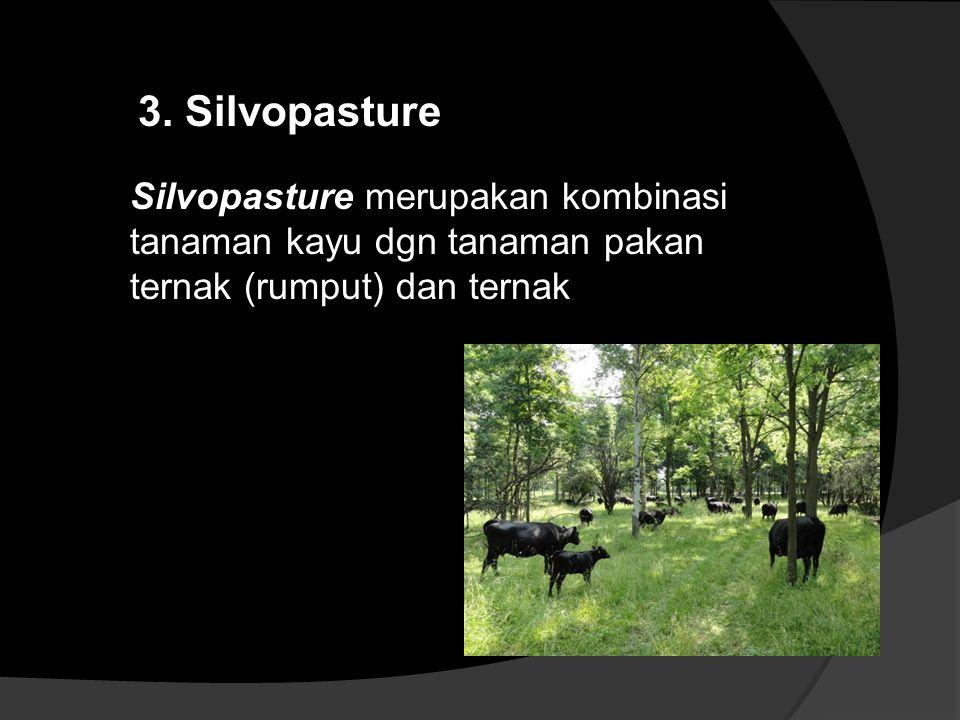 Silvopasture merupakan kombinasi tanaman kayu dgn tanaman pakan ternak (rumput) dan ternak 3. Silvopasture