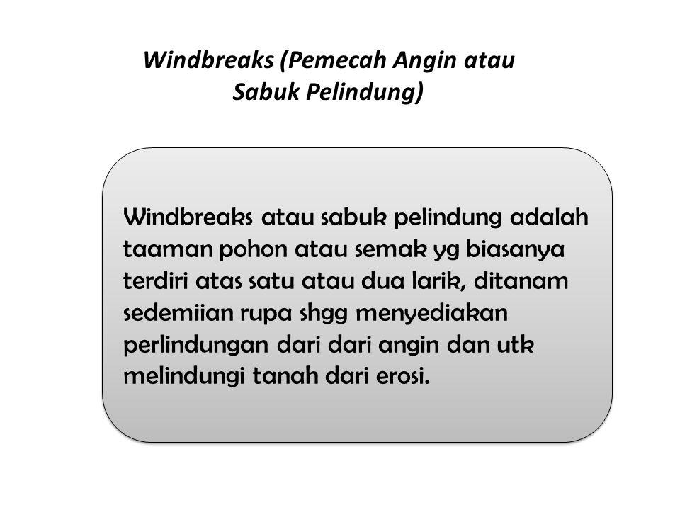 Windbreaks atau sabuk pelindung adalah taaman pohon atau semak yg biasanya terdiri atas satu atau dua larik, ditanam sedemiian rupa shgg menyediakan p