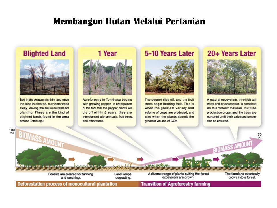 Membangun Hutan Melalui Pertanian