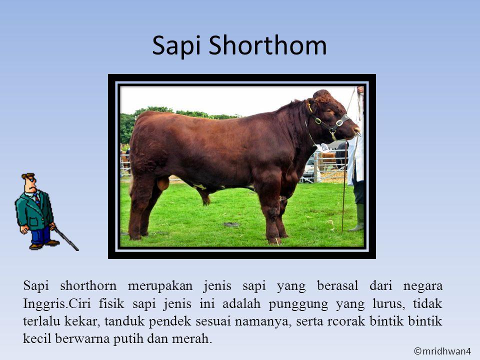 Sapi Shorthom Sapi shorthorn merupakan jenis sapi yang berasal dari negara Inggris.Ciri fisik sapi jenis ini adalah punggung yang lurus, tidak terlalu