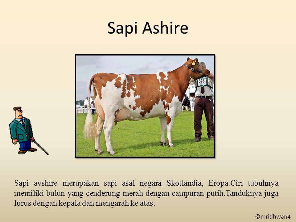 Sapi Ashire Sapi ayshire merupakan sapi asal negara Skotlandia, Eropa.Ciri tubuhnya memiliki bulun yang cenderung merah dengan campuran putih.Tandukny