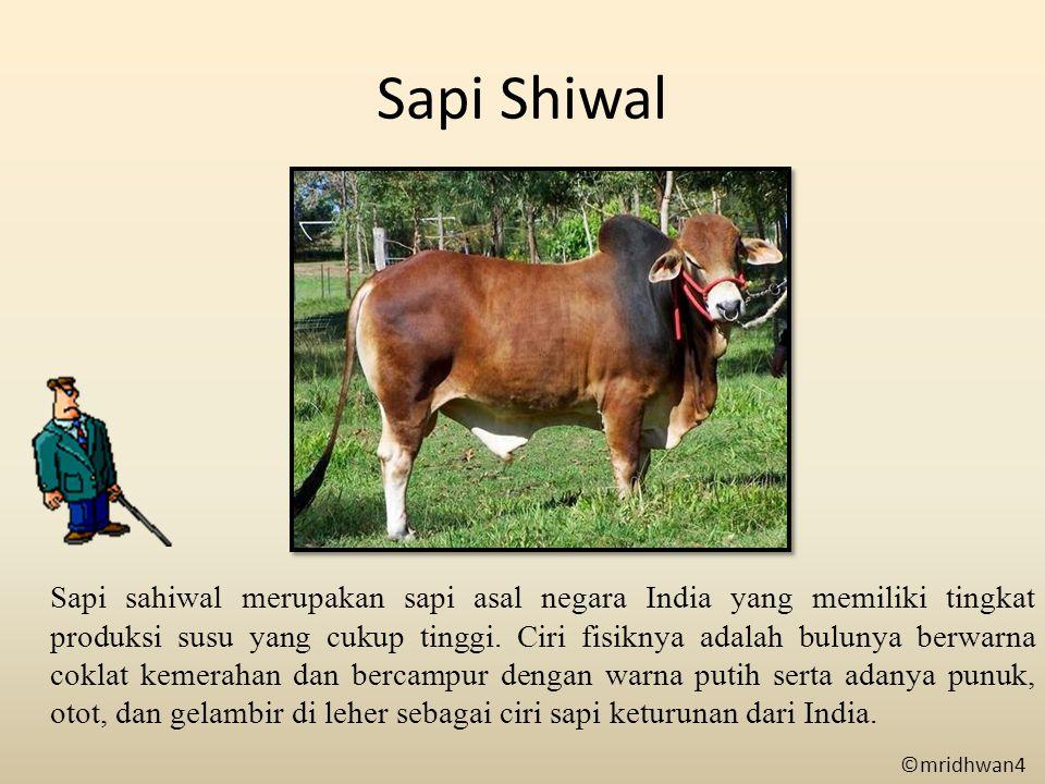 Sapi Shiwal Sapi sahiwal merupakan sapi asal negara India yang memiliki tingkat produksi susu yang cukup tinggi. Ciri fisiknya adalah bulunya berwarna