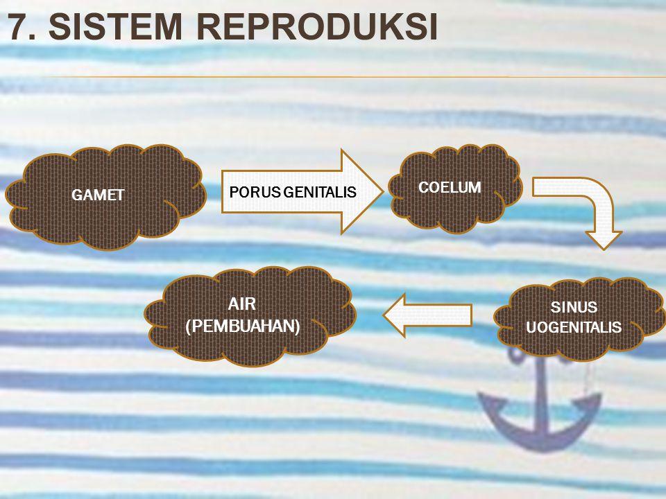 7. SISTEM REPRODUKSI GAMET PORUS GENITALIS COELUM SINUS UOGENITALIS AIR (PEMBUAHAN)