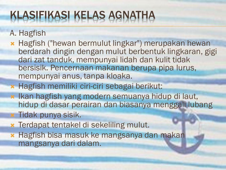 A. Hagfish  Hagfish (