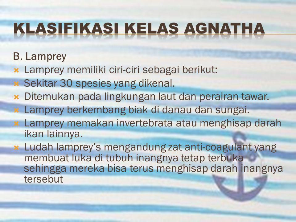 B. Lamprey  Lamprey memiliki ciri-ciri sebagai berikut:  Sekitar 30 spesies yang dikenal.  Ditemukan pada lingkungan laut dan perairan tawar.  Lam