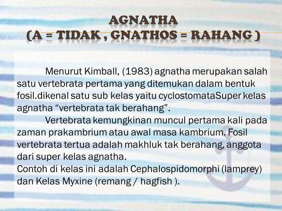 Menurut Kimball, (1983) agnatha merupakan salah satu vertebrata pertama yang ditemukan dalam bentuk fosil.dikenal satu sub kelas yaitu cyclostomataSup