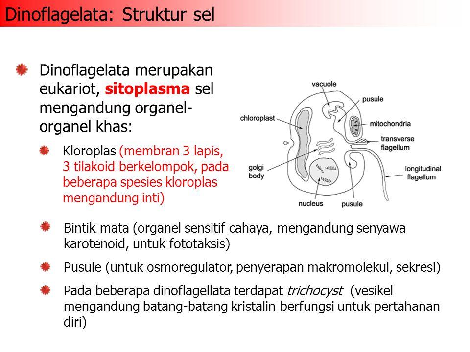 Dinoflagelata: Struktur sel Dinoflagelata merupakan eukariot, sitoplasma sel mengandung organel- organel khas: Kloroplas (membran 3 lapis, 3 tilakoid berkelompok, pada beberapa spesies kloroplas mengandung inti) Bintik mata (organel sensitif cahaya, mengandung senyawa karotenoid, untuk fototaksis) Pusule (untuk osmoregulator, penyerapan makromolekul, sekresi) Pada beberapa dinoflagellata terdapat trichocyst (vesikel mengandung batang-batang kristalin berfungsi untuk pertahanan diri)