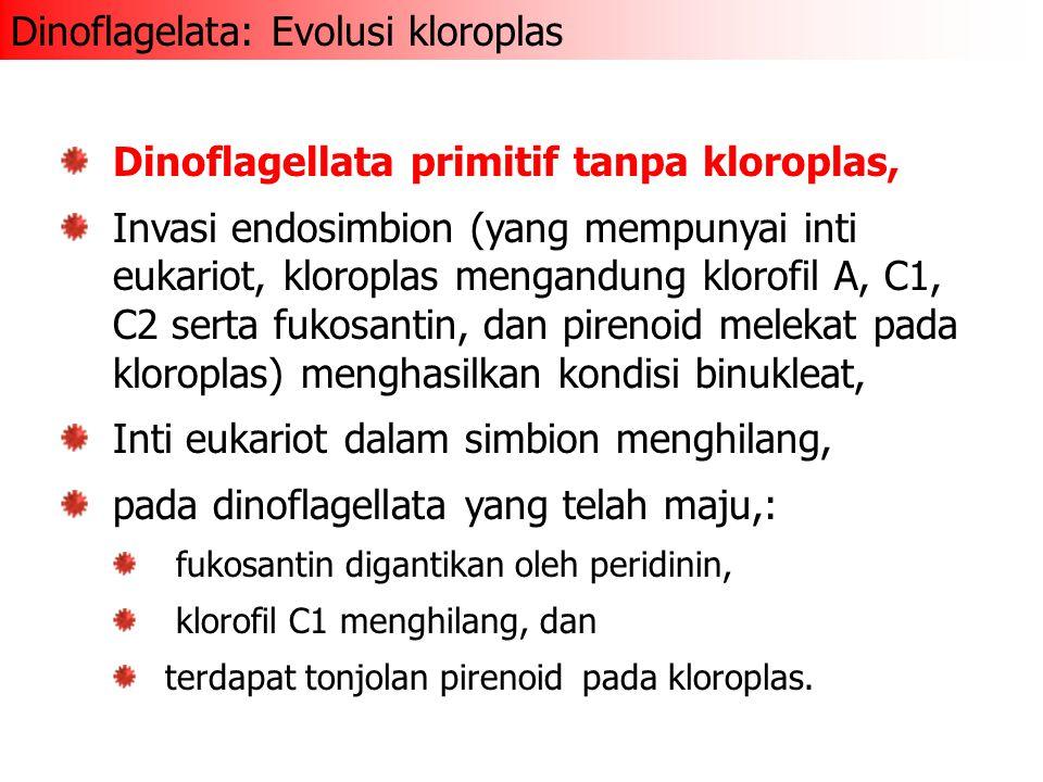 Dinoflagellata primitif tanpa kloroplas, Invasi endosimbion (yang mempunyai inti eukariot, kloroplas mengandung klorofil A, C1, C2 serta fukosantin, dan pirenoid melekat pada kloroplas) menghasilkan kondisi binukleat, Inti eukariot dalam simbion menghilang, pada dinoflagellata yang telah maju,: fukosantin digantikan oleh peridinin, klorofil C1 menghilang, dan terdapat tonjolan pirenoid pada kloroplas.