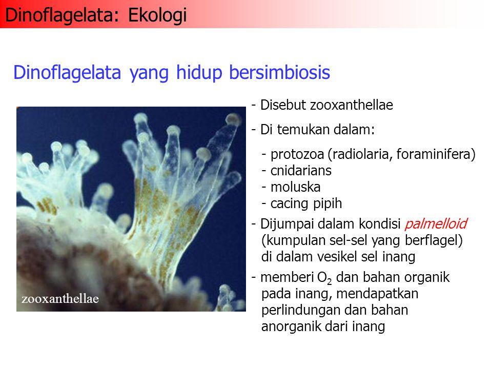 - Disebut zooxanthellae - Di temukan dalam: - protozoa (radiolaria, foraminifera) - cnidarians - moluska - cacing pipih Dinoflagelata yang hidup bersi