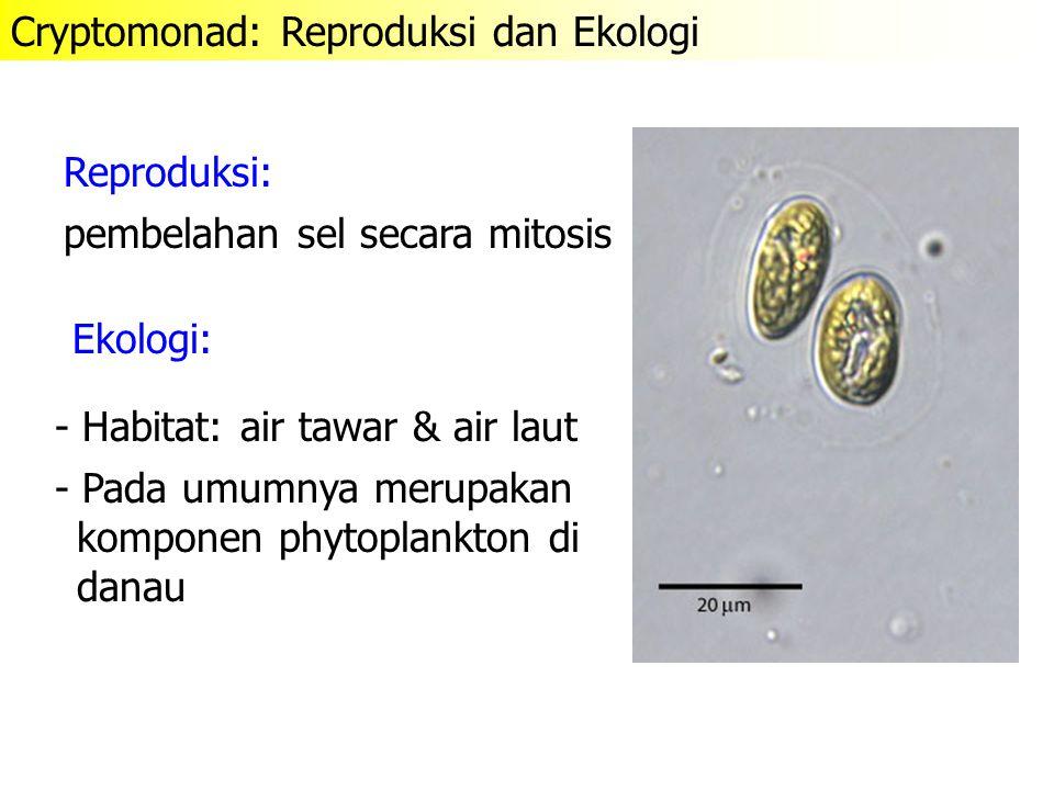Reproduksi: Ekologi: - Habitat: air tawar & air laut - Pada umumnya merupakan komponen phytoplankton di danau pembelahan sel secara mitosis Cryptomona
