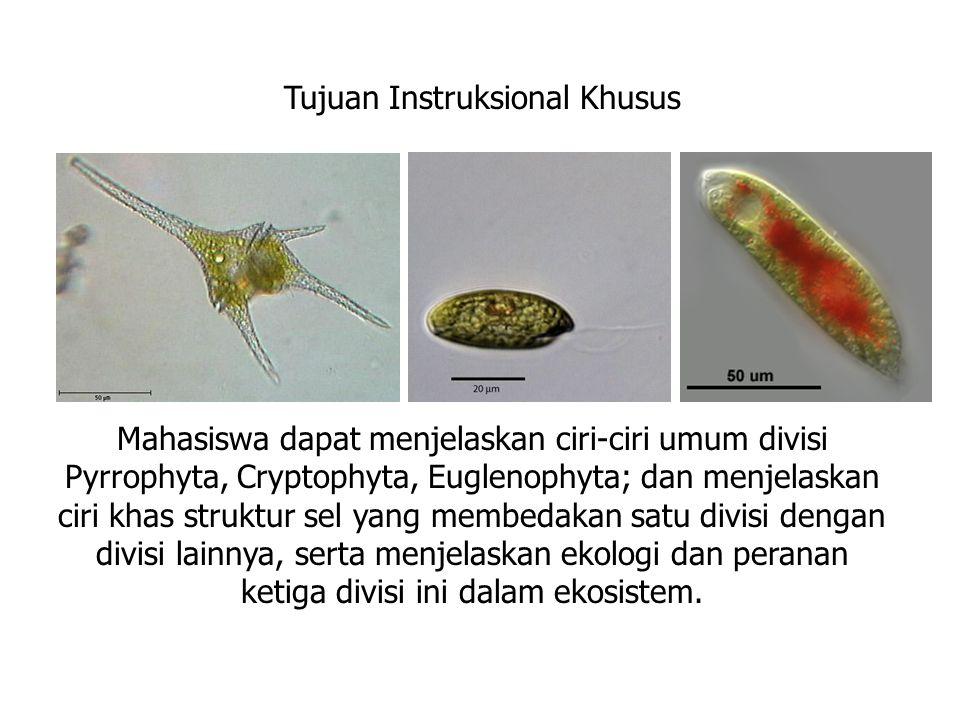 übentuk sel bervariasi üBioluminescent ( berpendar) üfotosintetik ü habitat: lautan ü tahap coccoid  dominan Pyrocystis Dinoflagelata: Beberapa contoh