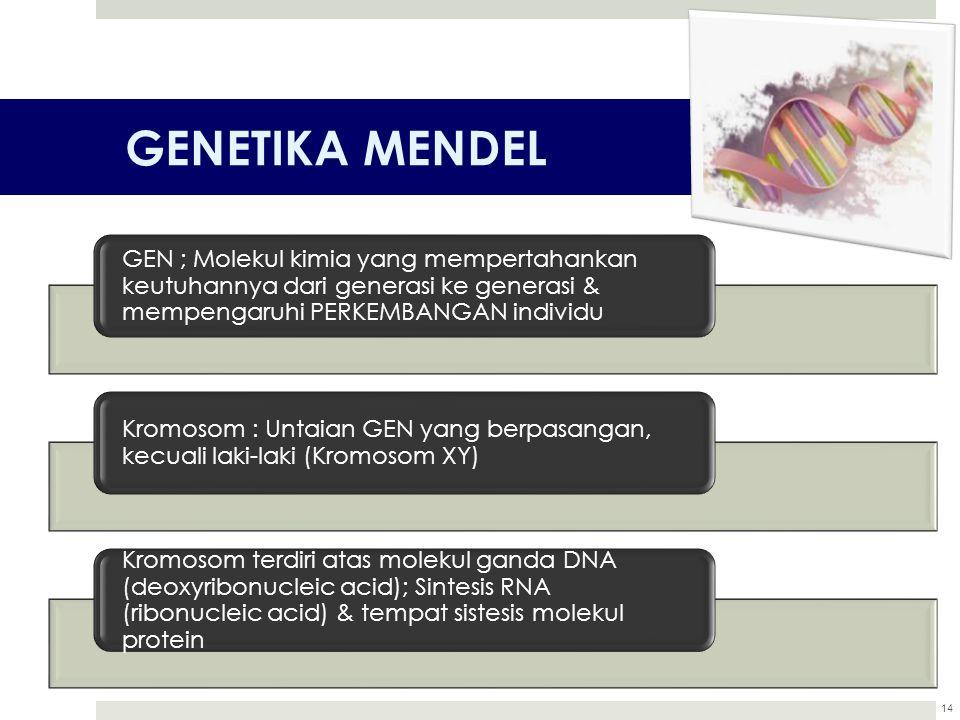 GENETIKA MENDEL 14 GEN ; Molekul kimia yang mempertahankan keutuhannya dari generasi ke generasi & mempengaruhi PERKEMBANGAN individu Kromosom : Untai