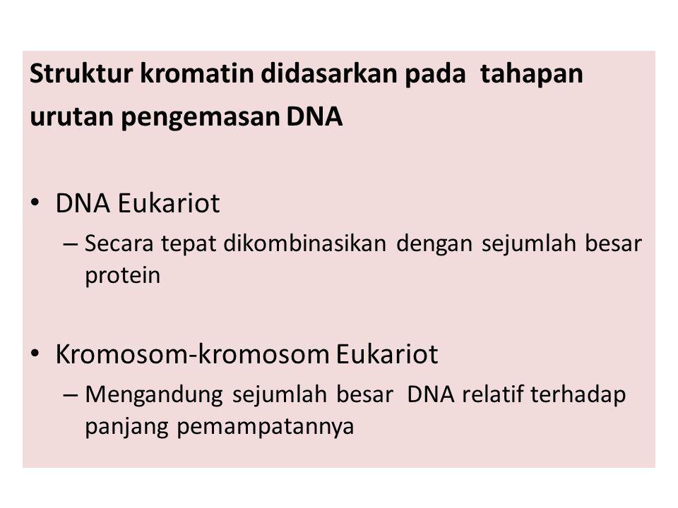Struktur kromatin didasarkan pada tahapan urutan pengemasan DNA DNA Eukariot – Secara tepat dikombinasikan dengan sejumlah besar protein Kromosom-kromosom Eukariot – Mengandung sejumlah besar DNA relatif terhadap panjang pemampatannya