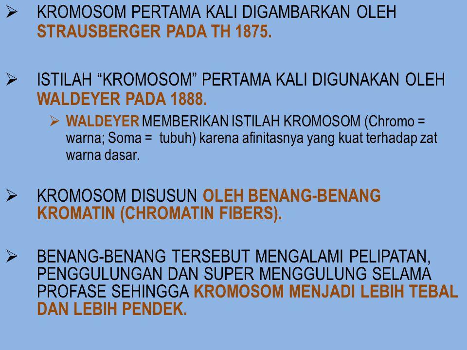 Sifat kimia kromatin atau kromosom Asal penelitian komposisi kimia dari inti : nanah + getah lambung (pepsin) mengandung sisa leukosit yang mati (ada inti) diketahui bahwa inti tersebut mengandung senyawa fosfor dengan BM yang tinggi deoksiribosa (gula pentosa) asam fosfat basa nitrogen yang terdiri atas 2 tipe (purin dan pirimidin)