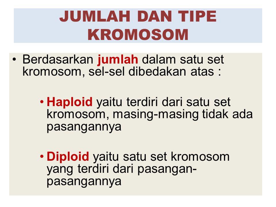 Berdasarkan jumlah dalam satu set kromosom, sel-sel dibedakan atas : Haploid yaitu terdiri dari satu set kromosom, masing-masing tidak ada pasangannya