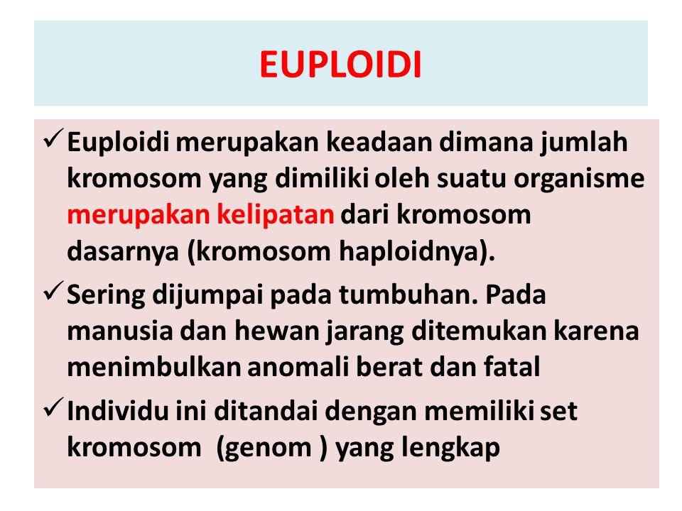 EUPLOIDI Euploidi merupakan keadaan dimana jumlah kromosom yang dimiliki oleh suatu organisme merupakan kelipatan dari kromosom dasarnya (kromosom hap