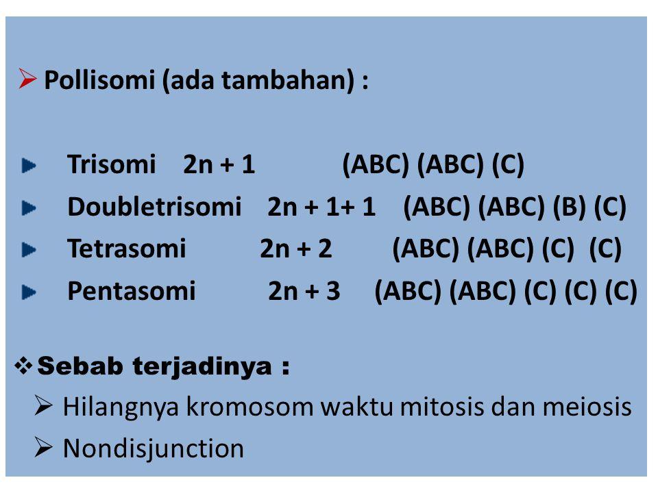 Trisomi 2n + 1 (ABC) (ABC) (C) Doubletrisomi 2n + 1+ 1 (ABC) (ABC) (B) (C) Tetrasomi 2n + 2 (ABC) (ABC) (C) (C) Pentasomi 2n + 3 (ABC) (ABC) (C) (C) (
