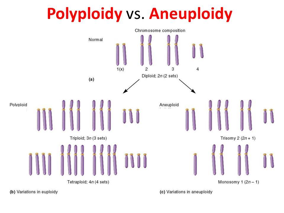 Polyploidy vs. Aneuploidy
