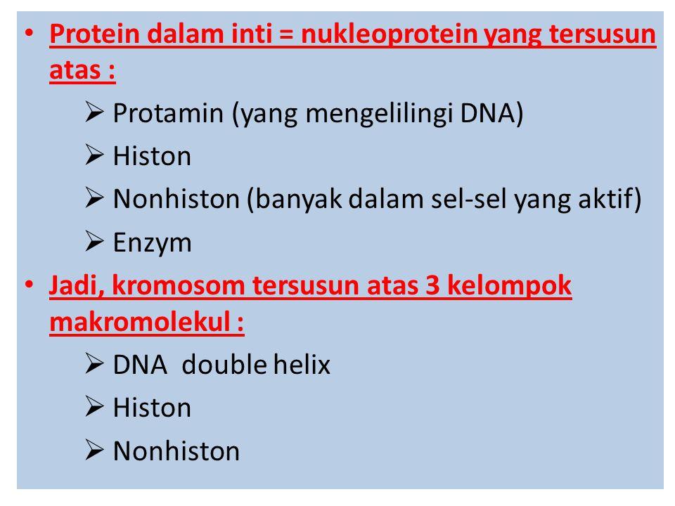  Histon :  Sekelompok molekul protein dengan BM rendah, banyak mengandung asam amino jenis lisin dan arginin  Histon terbentuk pada waktu yang bersamaan dengan sintesa DNA (Fase S)  Bedanya: histon disintesa di dalam sitoplasma yang selanjutnya dipindahkan ke dalam inti  Fungsinya untuk mengemas DNA (nukleosom) menjadi serat + 30 nm yang disebut kromatin dan menghambat transkripsi sehingga DNA tidak aktif  Histon mrpk protein struktural dari kromosom utk pengikat DNA, yg sbgn besar asam aminonya bermuatan positif shg membantu histon berikatan kuat dg DNA yg kaya muatan negatif