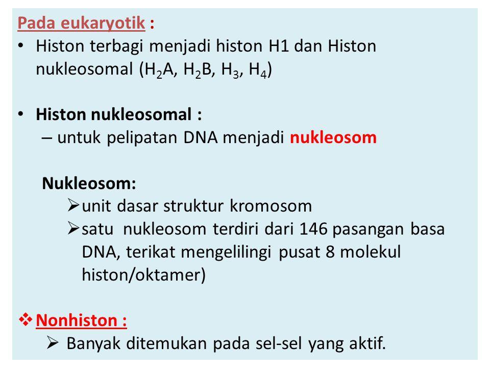 Pada eukaryotik : Histon terbagi menjadi histon H1 dan Histon nukleosomal (H 2 A, H 2 B, H 3, H 4 ) Histon nukleosomal : – untuk pelipatan DNA menjadi