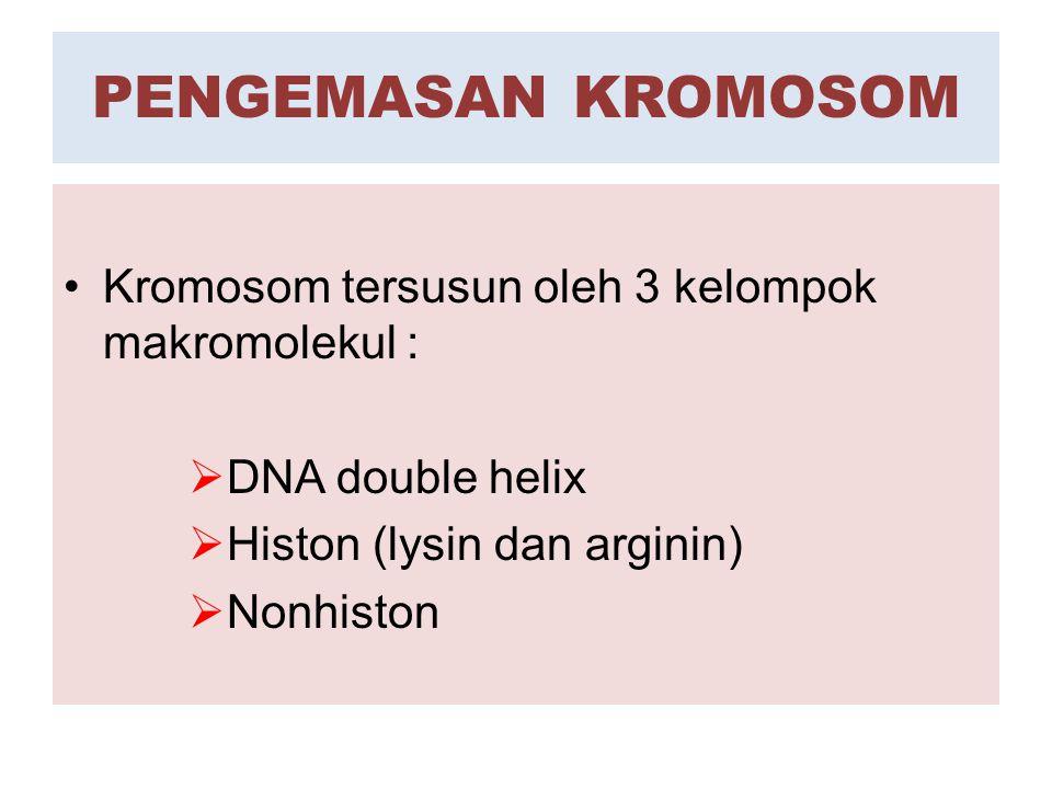  BAGIAN-BAGIAN KROMOSOM  Kromosom terdiri dari dua struktur yg simetris  KROMATID  Setiap kromatid mengandung Molekul DNA TUNGGAL  Kromatid melekat satu sama lainnya oleh SENTROMER  Selama profase dan kadang2 selama interfase, material kromososm tampak sebagai filamen tipis  KROMONEMA(TA)  Bagian kromosom yg melekat ke spindel mitosis  SENTROMER  Protein berbentuk cakram yg melekat pd sentromer  KINETOKOR  Fungsi kinetokor adalah untuk memberikan pusat pemasangan mikrotubul  bundaran kecil yg dipisahkan dari bagian kromosom lainnya oleh konstriksi sekunder  SATELIT  ORGANISATOR Nukleolar merupakan konstriksi sekunder yg mengandung gen-gen yg aktif mengkode rRNS 18s dan 28s  nukleolus