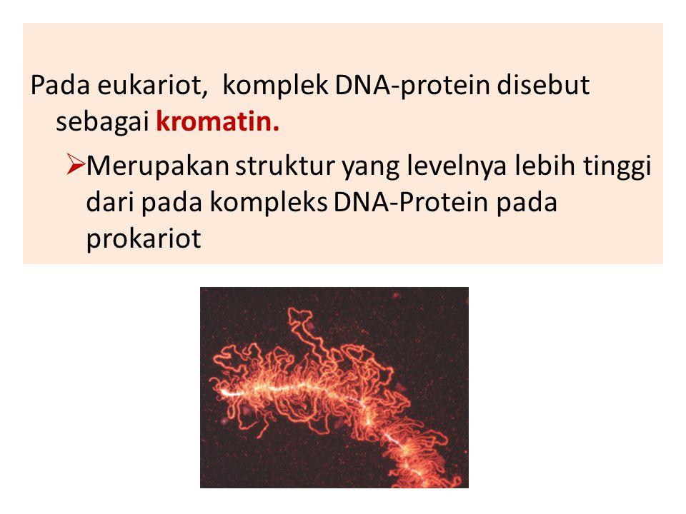 Pada eukariot, komplek DNA-protein disebut sebagai kromatin.  Merupakan struktur yang levelnya lebih tinggi dari pada kompleks DNA-Protein pada proka