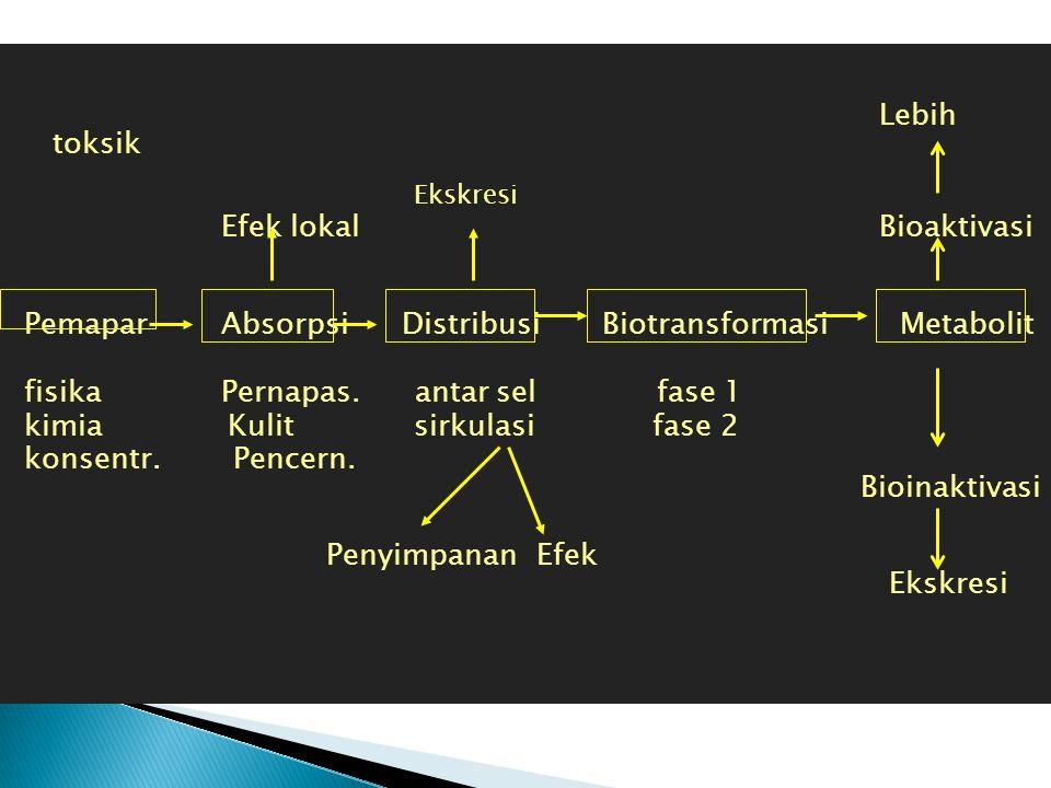 Lebih toksik Efek lokal Bioaktivasi Pemapar Absorpsi Distribusi Biotransformasi Metabolit fisika Pernapas. antar sel fase 1 kimia Kulit sirkulasi fase