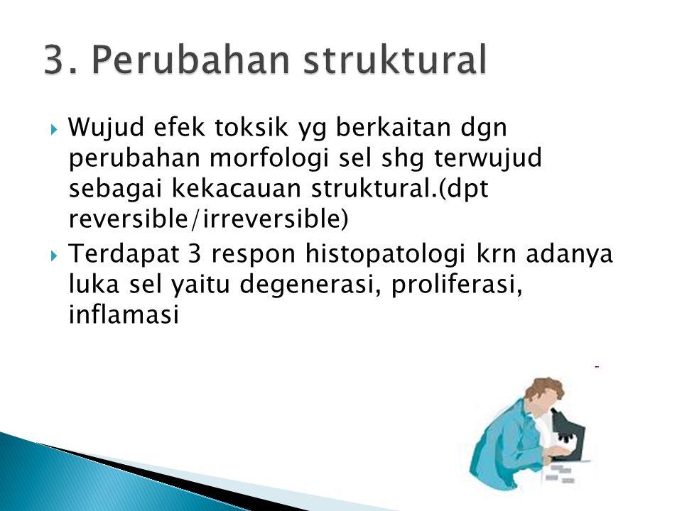  Wujud efek toksik yg berkaitan dgn perubahan morfologi sel shg terwujud sebagai kekacauan struktural.(dpt reversible/irreversible)  Terdapat 3 resp