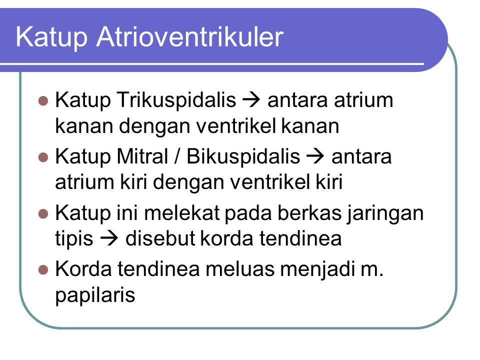Katup Atrioventrikuler Katup Trikuspidalis  antara atrium kanan dengan ventrikel kanan Katup Mitral / Bikuspidalis  antara atrium kiri dengan ventri