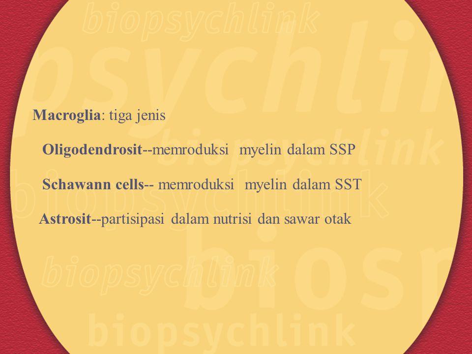 Macroglia: tiga jenis Oligodendrosit--memroduksi myelin dalam SSP Schawann cells-- memroduksi myelin dalam SST Astrosit--partisipasi dalam nutrisi dan