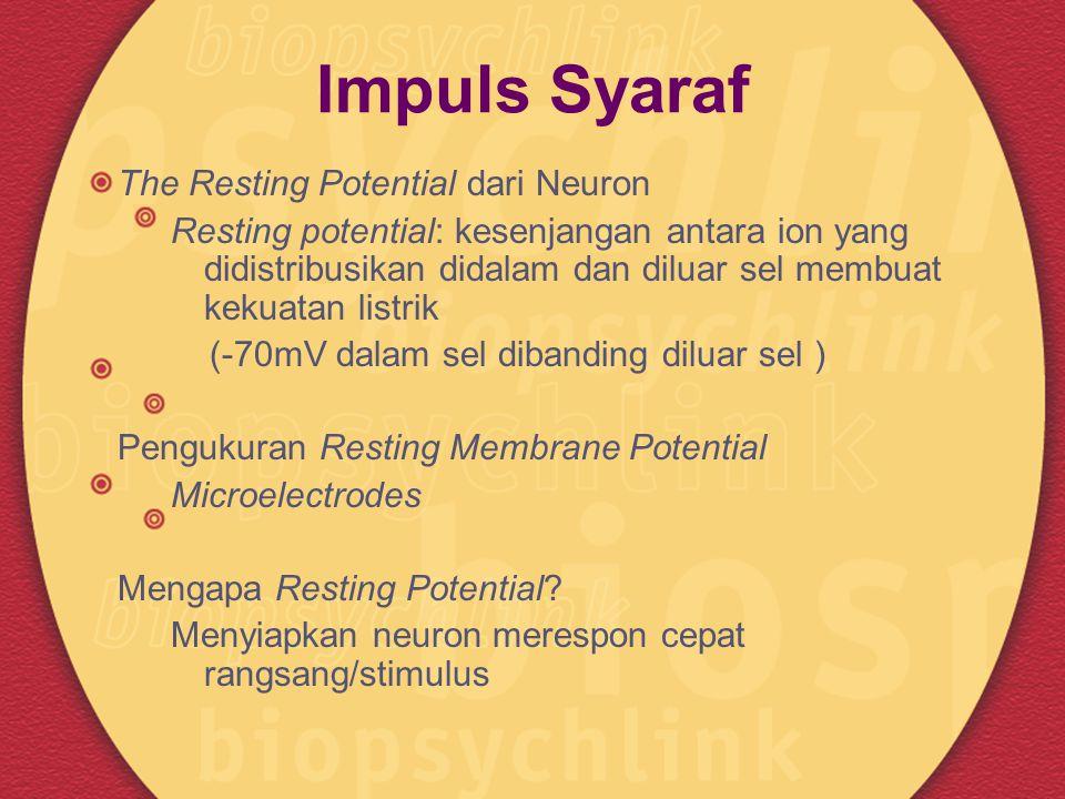 Impuls Syaraf The Resting Potential dari Neuron Resting potential: kesenjangan antara ion yang didistribusikan didalam dan diluar sel membuat kekuatan