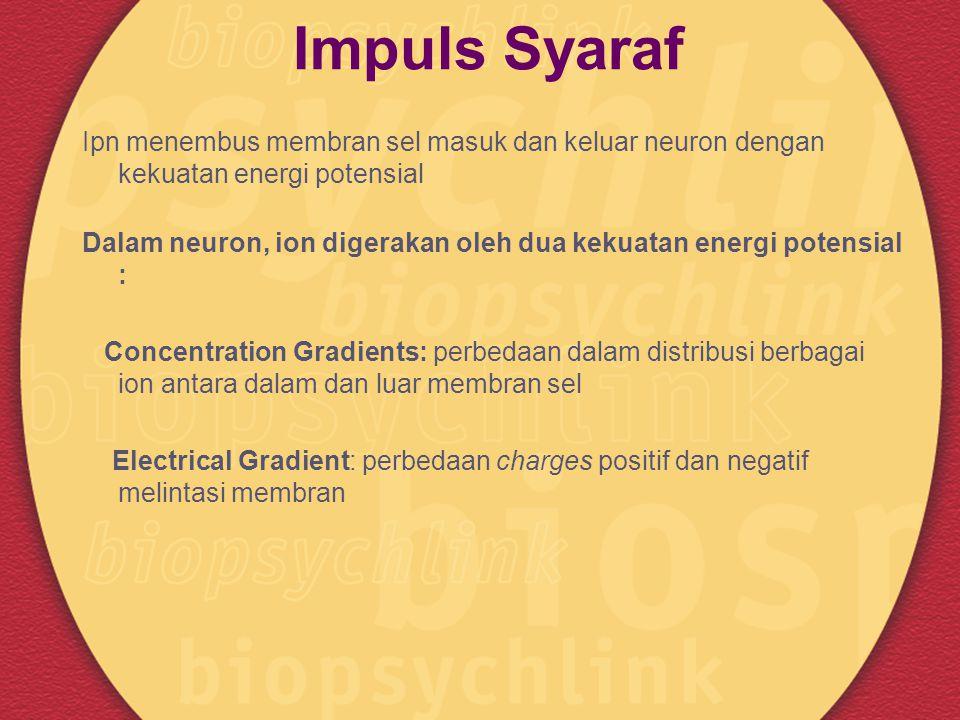 Impuls Syaraf Ipn menembus membran sel masuk dan keluar neuron dengan kekuatan energi potensial Dalam neuron, ion digerakan oleh dua kekuatan energi p