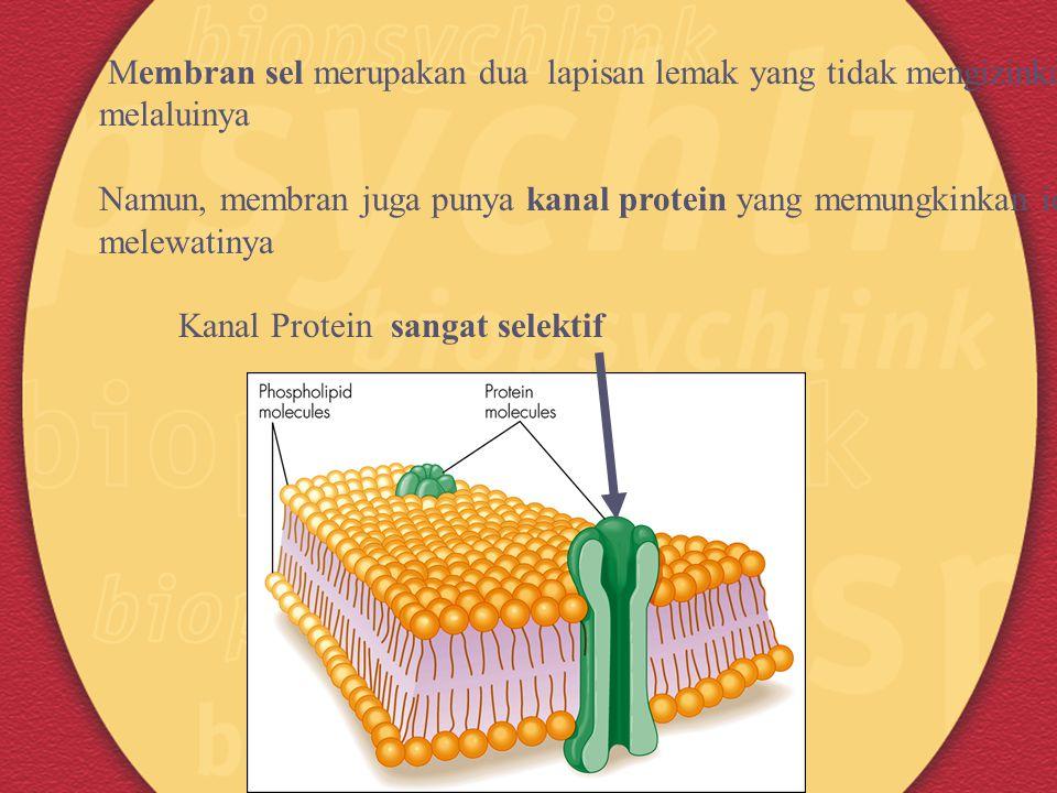 Membran sel merupakan dua lapisan lemak yang tidak mengizinkan ion melaluinya Namun, membran juga punya kanal protein yang memungkinkan ion melewatiny