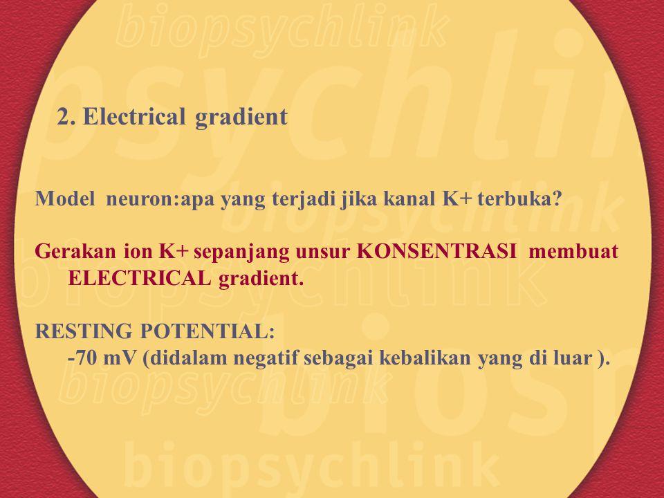 2. Electrical gradient Model neuron:apa yang terjadi jika kanal K+ terbuka? Gerakan ion K+ sepanjang unsur KONSENTRASI membuat ELECTRICAL gradient. RE