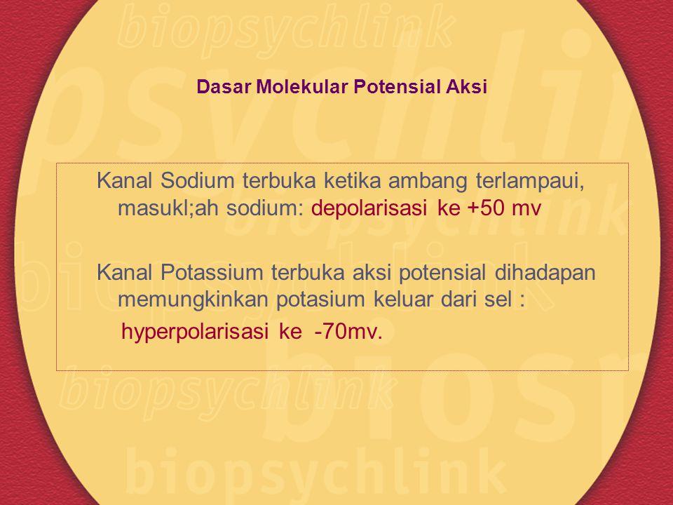 Dasar Molekular Potensial Aksi Kanal Sodium terbuka ketika ambang terlampaui, masukl;ah sodium: depolarisasi ke +50 mv Kanal Potassium terbuka aksi po