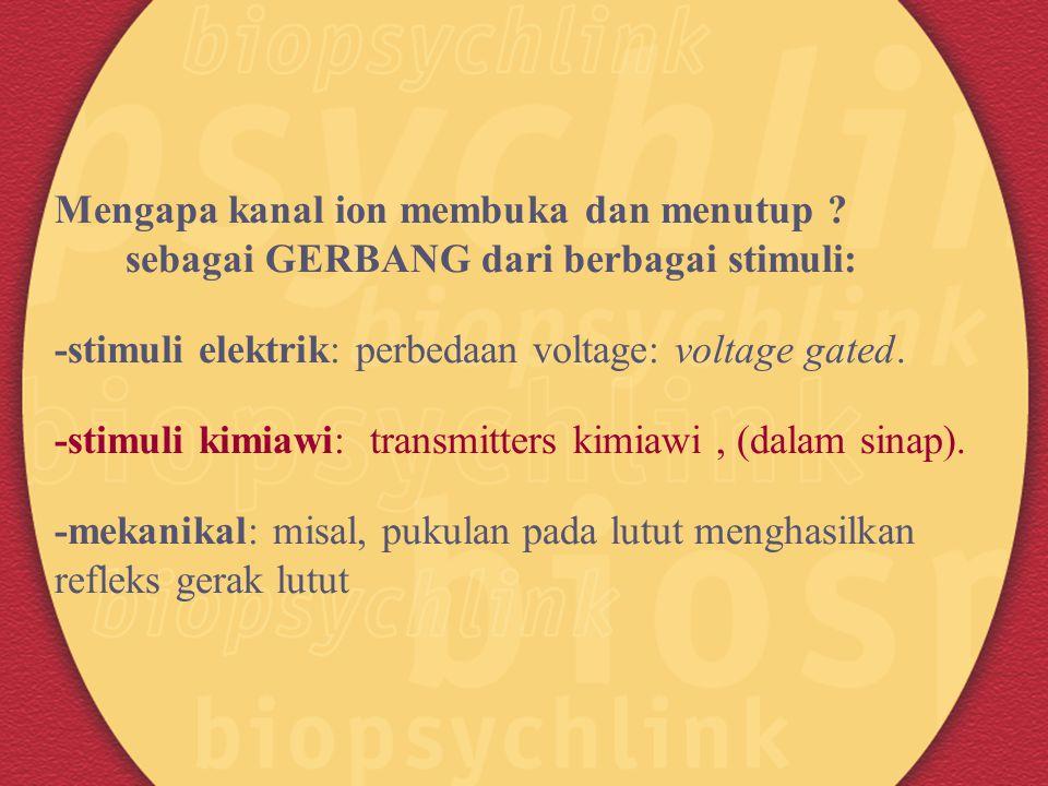 Mengapa kanal ion membuka dan menutup ? sebagai GERBANG dari berbagai stimuli: -stimuli elektrik: perbedaan voltage: voltage gated. -stimuli kimiawi: