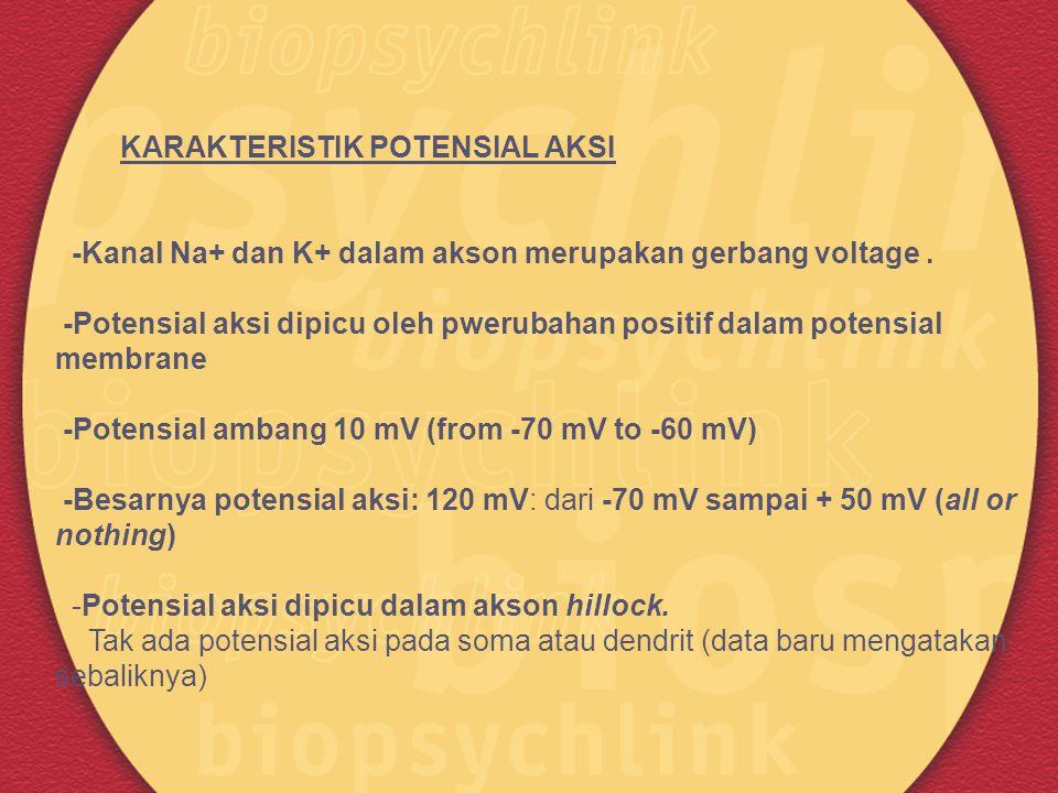 KARAKTERISTIK POTENSIAL AKSI -Kanal Na+ dan K+ dalam akson merupakan gerbang voltage. -Potensial aksi dipicu oleh pwerubahan positif dalam potensial m
