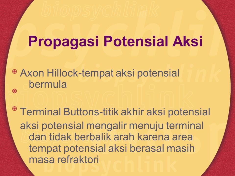 Propagasi Potensial Aksi Axon Hillock-tempat aksi potensial bermula Terminal Buttons-titik akhir aksi potensial aksi potensial mengalir menuju termina