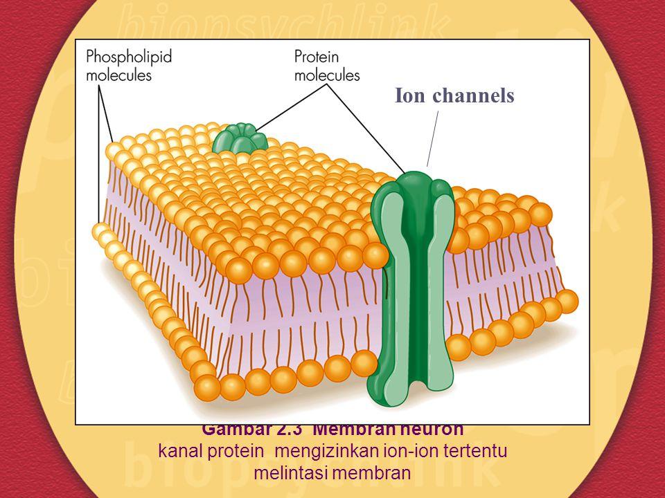 Gambar 2.3 Membran neuron kanal protein mengizinkan ion-ion tertentu melintasi membran Ion channels