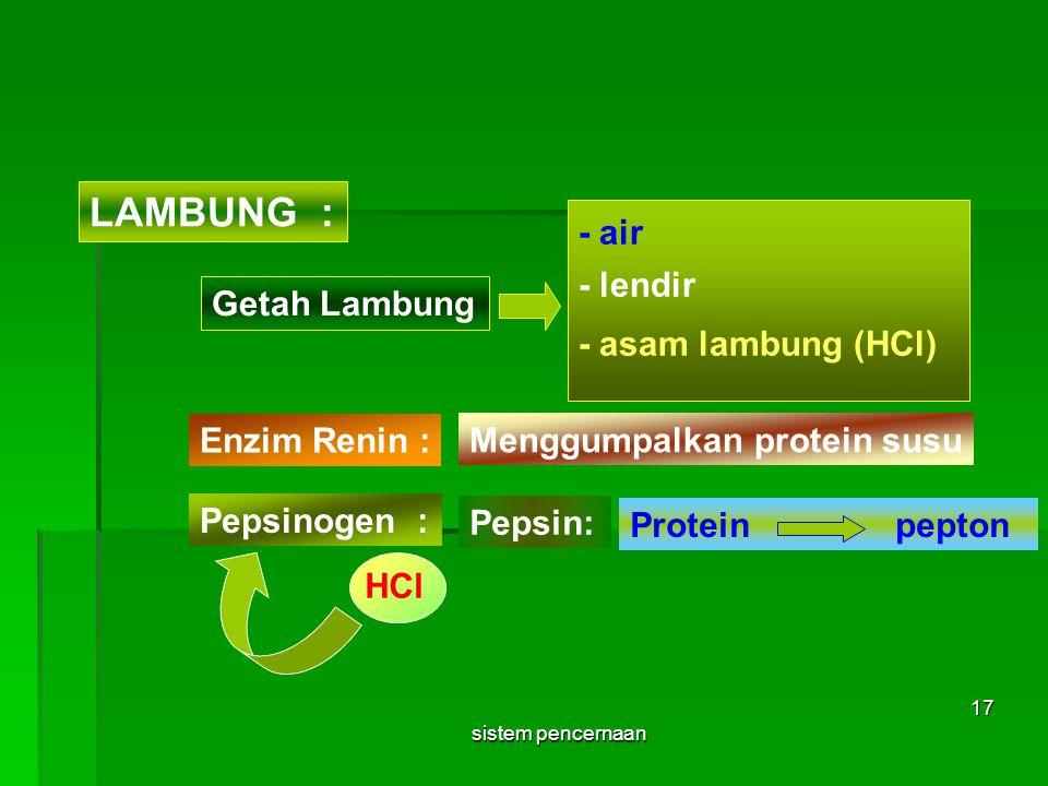 Getah Lambung - air LAMBUNG : - lendir - asam lambung (HCl) Enzim Renin : Menggumpalkan protein susu Pepsinogen : Pepsin: HCl Protein pepton sistem pe