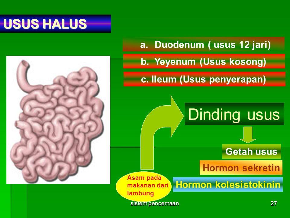 sistem pencernaan27 USUS HALUS a.Duodenum ( usus 12 jari) b. Yeyenum (Usus kosong) c. Ileum (Usus penyerapan) Dinding usus Getah usus Hormon sekretin