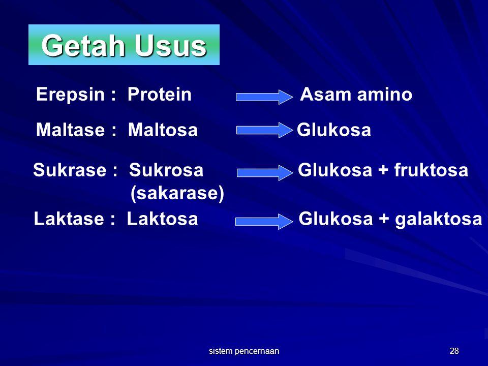 Getah Usus Erepsin : Protein Asam amino Maltase : Maltosa Glukosa Sukrase : Sukrosa Glukosa + fruktosa (sakarase) Laktase : Laktosa Glukosa + galaktos