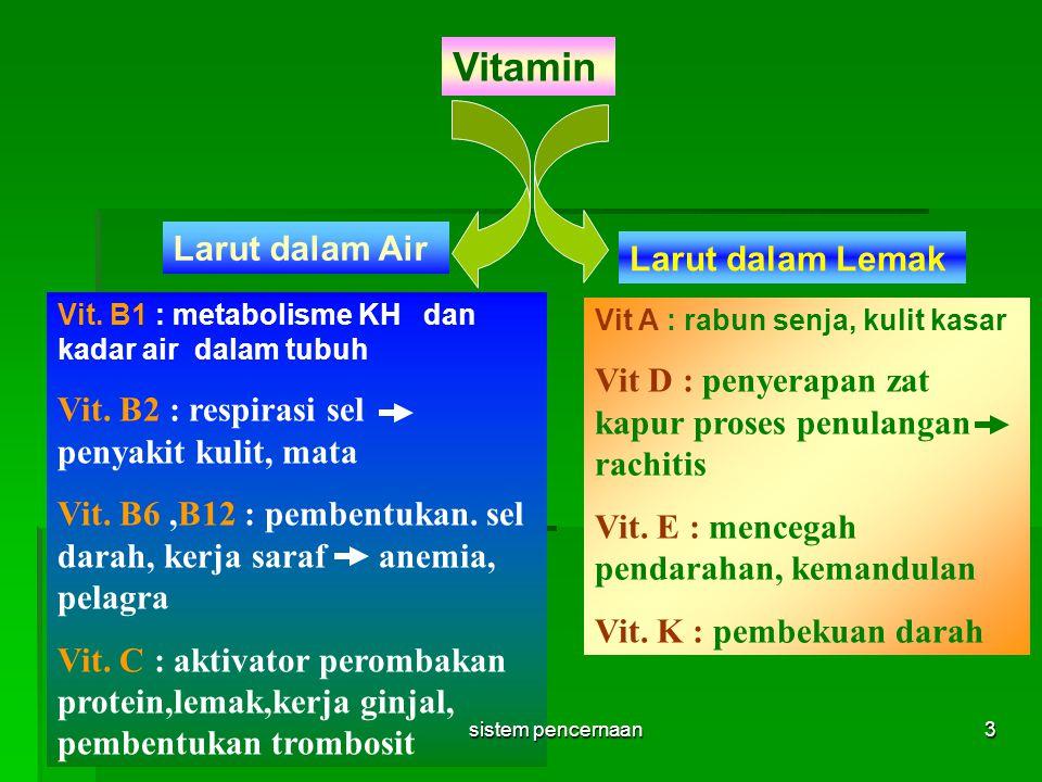 Vitamin Larut dalam Air Larut dalam Lemak Vit. B1 : metabolisme KH dan kadar air dalam tubuh Vit. B2 : respirasi sel penyakit kulit, mata Vit. B6,B12